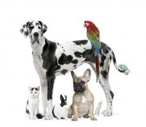Eine Gruppe Tiere